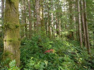 Photo 5: 6821 FARNHAM ROAD in MERVILLE: CV Merville Black Creek House for sale (Comox Valley)  : MLS®# 758027