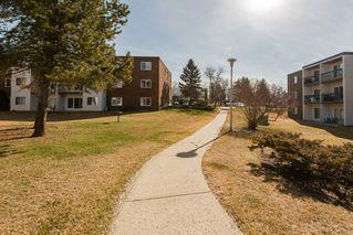 Photo 15: 204 11420 40 Avenue in Edmonton: Zone 16 Condo for sale : MLS®# E4152102