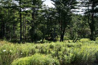 Photo 8: Lot 36 Hawthorn Road in Mahone Bay: 405-Lunenburg County Vacant Land for sale (South Shore)  : MLS®# 201808063