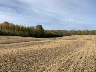 Photo 4: Twp. 545 & Rg. Rd. 280: Rural Sturgeon County Rural Land/Vacant Lot for sale : MLS®# E4175910