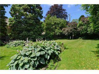 Photo 3: 1685 W KING EDWARD AV in Vancouver: Home for sale : MLS®# V1017556