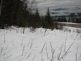 Photo 7: Lot 1 Trans Can Hwy: Blind Bay Land Only for sale (Shuswap)  : MLS®# 10148323