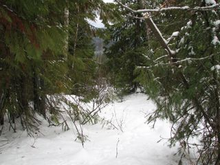 Photo 9: Lot 1 Trans Can Hwy: Blind Bay Land Only for sale (Shuswap)  : MLS®# 10148323