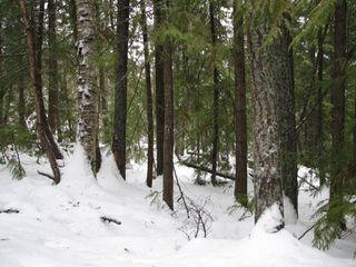 Photo 14: Lot 1 Trans Can Hwy: Blind Bay Land Only for sale (Shuswap)  : MLS®# 10148323