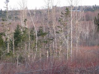 Photo 11: West River East Side Road in Durham: 108-Rural Pictou County Vacant Land for sale (Northern Region)  : MLS®# 201902921