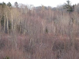 Photo 12: West River East Side Road in Durham: 108-Rural Pictou County Vacant Land for sale (Northern Region)  : MLS®# 201902921
