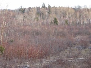 Photo 10: West River East Side Road in Durham: 108-Rural Pictou County Vacant Land for sale (Northern Region)  : MLS®# 201902921