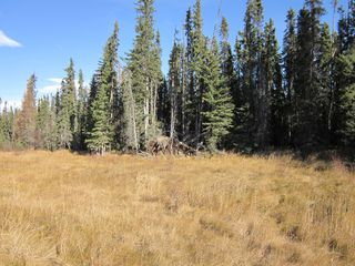 Photo 10: NE 13-54 Range Road 130: Niton Junction Rural Land for sale (Edson)  : MLS®# 32591