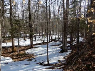 Photo 9: West River Station Road in Salt Springs: 108-Rural Pictou County Vacant Land for sale (Northern Region)  : MLS®# 202006078