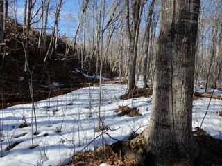 Photo 18: West River Station Road in Salt Springs: 108-Rural Pictou County Vacant Land for sale (Northern Region)  : MLS®# 202006078