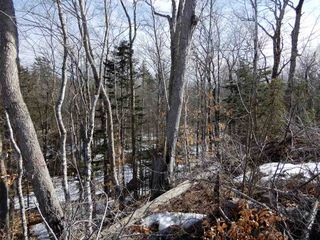 Photo 8: West River Station Road in Salt Springs: 108-Rural Pictou County Vacant Land for sale (Northern Region)  : MLS®# 202006078
