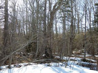 Photo 10: West River Station Road in Salt Springs: 108-Rural Pictou County Vacant Land for sale (Northern Region)  : MLS®# 202006078