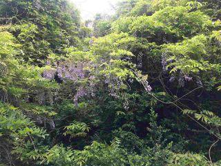 Photo 3: 281 STURDIES BAY Road: Galiano Island House for sale (Islands-Van. & Gulf)  : MLS®# R2450030