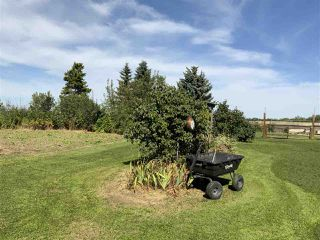 Photo 9: 450010 RGE RD 265: Rural Wetaskiwin County House for sale : MLS®# E4212276