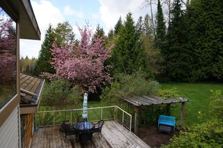 Photo 26: 26177 126th St. in Maple Ridge: Whispering Hills House for sale : MLS®# V1113864