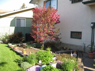 Photo 21: Great Family Home: Edmonton House for sale : MLS®# E4003780