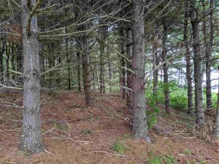 Photo 5: Lot 5B Pictou Landing Road, Little Harbour in Little Harbour: 108-Rural Pictou County Vacant Land for sale (Northern Region)  : MLS®# 202010236