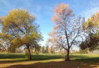 Photo 4: 10219 84 Street in Edmonton: Zone 19 House for sale : MLS®# E4221302