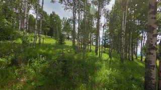 Photo 41: 74194 Highway 40 in Rural Bighorn No. 8, M.D. of: Rural Bighorn M.D. Detached for sale : MLS®# A1017139