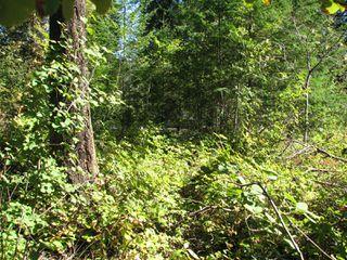 Photo 10: lot 46: Blind Bay Land Only for sale (shuswap)  : MLS®# 10214876