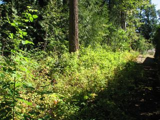 Photo 8: lot 46: Blind Bay Land Only for sale (shuswap)  : MLS®# 10214876