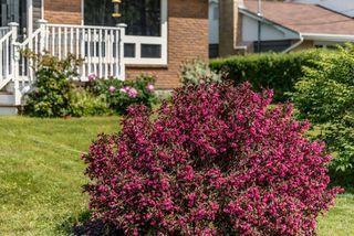 Photo 25: 286 Gourok Avenue in Dartmouth: 17-Woodlawn, Portland Estates, Nantucket Residential for sale (Halifax-Dartmouth)  : MLS®# 202011555