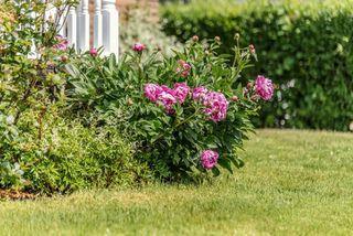 Photo 27: 286 Gourok Avenue in Dartmouth: 17-Woodlawn, Portland Estates, Nantucket Residential for sale (Halifax-Dartmouth)  : MLS®# 202011555