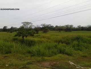 Photo 4:  in Penonome: Farm for sale (Rio Grande)  : MLS®# ACI - PJ