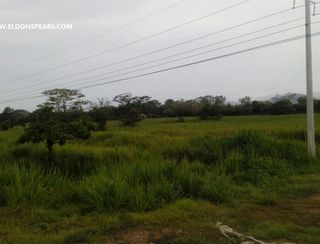 Photo 3:  in Penonome: Farm for sale (Rio Grande)  : MLS®# ACI - PJ