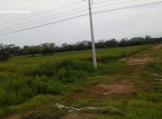 Photo 2:  in Penonome: Farm for sale (Rio Grande)  : MLS®# ACI - PJ