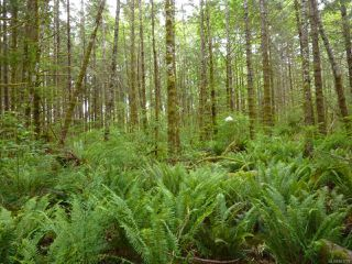 Main Photo: SL 3 950 Heriot Bay Rd in QUADRA ISLAND: Isl Quadra Island Land for sale (Islands)  : MLS®# 841731