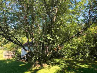 Photo 33: 44 PINE Street: Sherwood Park House for sale : MLS®# E4207463