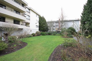 Photo 10: 106 - 20460 54 Ave in Langley: Langley City Condo for sale : MLS®# R2041657