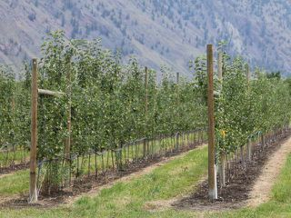 Photo 1: LOT 12 OSPREY Lane: Keremeos Agriculture for sale