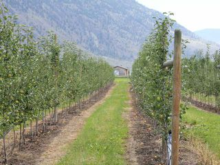 Photo 5: LOT 12 OSPREY Lane: Keremeos Agriculture for sale