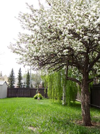 Photo 31: 18737 70 Avenue NW: Edmonton House for sale : MLS®# E4036498