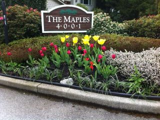 "Photo 29: 207 4001 MT SEYMOUR Parkway in North Vancouver: Roche Point Townhouse  in ""THE MAPLES"" : MLS®# V964499"