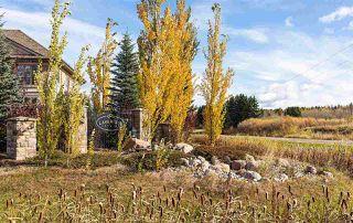 Photo 12: 60 53217 Range Road 263 Road: Rural Parkland County Rural Land/Vacant Lot for sale : MLS®# E4223046