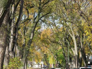 Photo 20: 93 Martin Avenue West in WINNIPEG: East Kildonan Residential for sale (North East Winnipeg)  : MLS®# 1220880