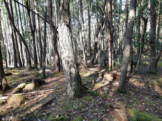 Photo 8: lot 170 Halibut Hill Rd in : Isl Mudge Island Land for sale (Islands)  : MLS®# 857458