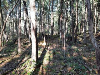 Photo 12: lot 170 Halibut Hill Rd in : Isl Mudge Island Land for sale (Islands)  : MLS®# 857458