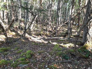 Photo 6: lot 170 Halibut Hill Rd in : Isl Mudge Island Land for sale (Islands)  : MLS®# 857458