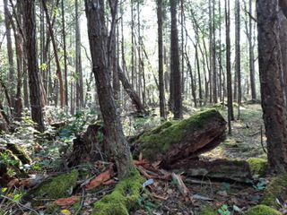 Photo 7: lot 170 Halibut Hill Rd in : Isl Mudge Island Land for sale (Islands)  : MLS®# 857458