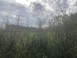 Photo 4: 0 520 Highway in Lac Du Bonnet RM: RM of Lac du Bonnet Residential for sale (R28)  : MLS®# 1923428