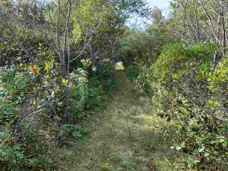 Photo 1: Acreage Warburton Road in Gardiner Mines: 203-Glace Bay Vacant Land for sale (Cape Breton)  : MLS®# 202018915