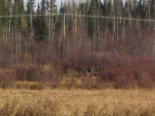 Photo 26: NW 24-54 RR 131: Niton Junction Rural Land for sale (Edson)  : MLS®# 32590