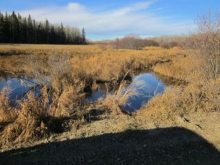 Photo 8: NW 24-54 RR 131: Niton Junction Rural Land for sale (Edson)  : MLS®# 32590