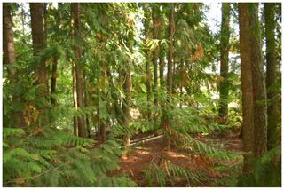 Photo 17: Lot 49 Forest Drive: Blind Bay Vacant Land for sale (Shuswap Lake)  : MLS®# 10217653