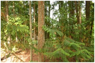 Photo 16: Lot 49 Forest Drive: Blind Bay Vacant Land for sale (Shuswap Lake)  : MLS®# 10217653