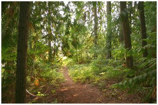 Photo 15: Lot 49 Forest Drive: Blind Bay Vacant Land for sale (Shuswap Lake)  : MLS®# 10217653